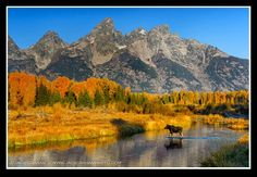 Fall color in Grand Teton National Park   ©Jack Graham Photography