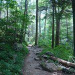 Newfound Gap Road (Great Smoky Mountains National Park, TN): Top Tips Before You Go - TripAdvisor