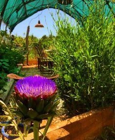 Flor de alcachofa!