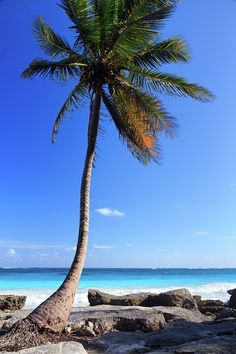 Tulum, Mexico. how beauitful does this look!!!