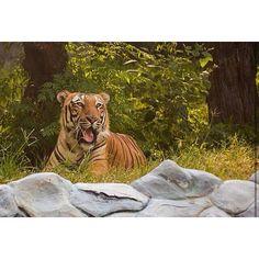 National Geological Park ___________________________________  #delhi #delhigram #delhi_igers #delhidiaries #india #incredibleindia #nature #natureza #nature_shooters #color #colourful #instacolor #Instagood #Wildlife #Savetiger #indiantiger #instagood #beautiful #photooftheday #photo #vscocam #vsco #vscogood #Travel #Forest #SouthAfrica #Kerala #Chennai #jharkhand #Dubai via @shreyaartphotography