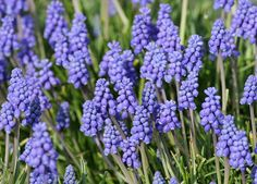 The Best Perennials to Plant in the Fall - PureWow