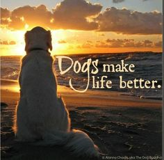 Dogs make life better.