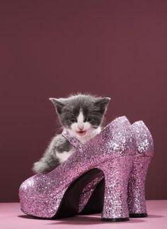 Kittens love pink ~