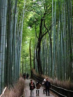 Sagano Bamboo Forest (Wow, I never realized bamboo would grow to be so tall!!!)