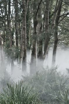 Fujiko Nakaya's fog sculpture