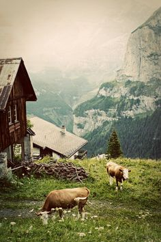 Morning in the Alps  Fine Art Photograph by AaronHuniuPhoto