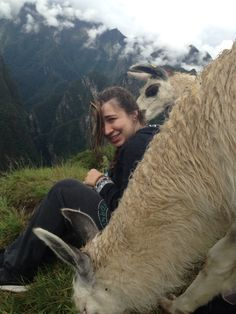 Machu Picchu June 2015  Llamas everywhere!!