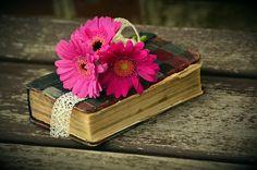 Gerbera, Rosa, Flor, Banco, Romântico, Livro, Bíblia