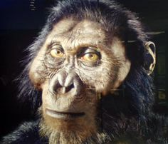 Paranthropus aethiopicus or Australopithecus aethiopicus is an extinct species of hominin, one of the robust australopithecines.