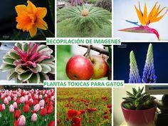http://jardineroalgeciras.blogspot.com/2016/02/180-imagenes-de-plantas-toxicas-para.html