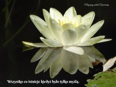 Free Pictures, Free Photos, Free Images, Aquatic Plants, Water Lilies, Lotus, Succulents, Lily, Ayurveda