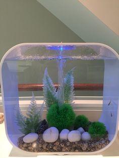 Aquarium Ideas, Aquarium Design, Funny Animal Videos, Funny Animals, Biorb Fish Tank, Pool Water Features, Pet Turtle, Beta Fish, Dress Sketches