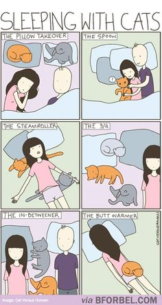 b for bel: When Sleeping with Cats...