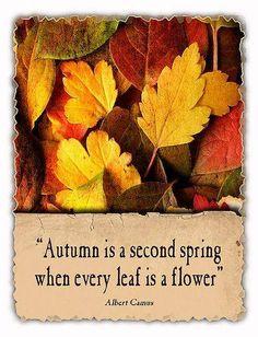 Autumn In New York, Harvest Moon, Fall Harvest, Tree Leaves, Four Seasons, Garden Quotes, Autumn Garden, Autumn Leaves, Fall Halloween