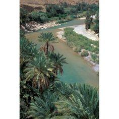 Lush Palms Line the Banks of the Oued (River) Ziz Morocco Canvas Art - John & Lisa Merrill DanitaDelimont (24 x 36)