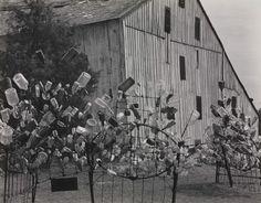 "bottle trees ~~ Winter Zero Swartsel's ""Bottle Farm,"" Farmersville, Ohio Edward Weston, 1941. Photograph, gelatin silver print. The Lane Collection."