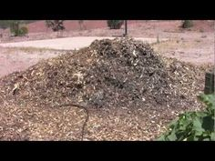 "This is the BEST ever way to garden ever! Free Wood Chips for My ""Back to Eden"" Garden"