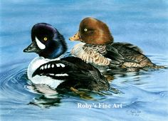 Pastel Barrow's Goldeneye Original Painting - California Duck Stamp Competition entry by Roby Baer