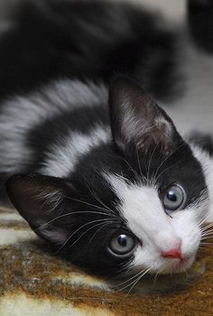 \Kittens can happen to anyone.\ --Paul Gallico