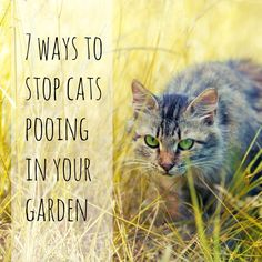 7 ways to stop cats pooing in your garden. Tips for keeping neighbours' cats out your garden.