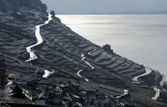 The vineyards of Lavaux, overlooking Lake Leman after an overnight snowfall in Bourg-en-Lavaux near Vevey, Switzerland, on March 7, 2016.