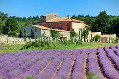 Location d'un  domaine de vacances avec piscine, au milieu des champs de lavande, dans les Alpes de Haute Provence avec Coins Secrets.  Holiday letting in Provence #provence #vacances #lavande