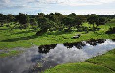 Okavango Delta  famous Chief's Island in the Moremi Game Reserve