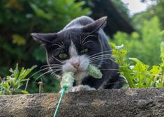 Cat-filled island in Japan