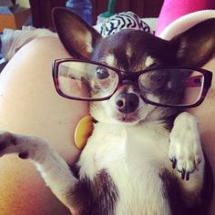 Dogs Wearing Eyeglasses .  ••••(KO) Be patient, puppy. They will soon become distracted and wander away.