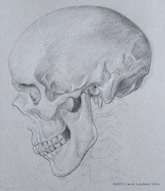 Skull 2 by Carol Lambert