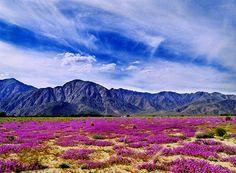 Anzo Borrego Desert, California