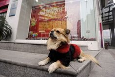 Wang Cai, rescued from homelessness, waits outside his owner's job for 8 hours every day