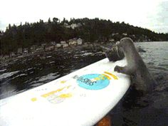 Oh my gosh baby seals.
