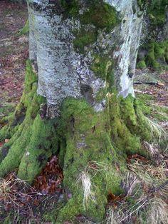 Skotland, St Mary's Loch, Desember 2012