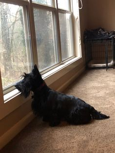 There's squirrels in them there trees! Great Love, Squirrels, Scottie, Trees, World, Dogs, Animals, Chipmunks, Scottie Dog