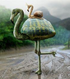 TurtleFlamingo - Worth1000 Contests
