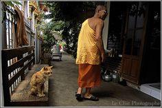 Le chat et le bonze ,Bangkok