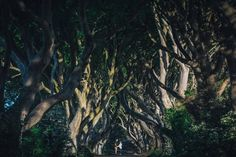 As seen on Game of Thrones, the Dark Hedges and 2 loved up individuals 😜 Irish Wedding, Hedges, The Darkest, Wedding Photography, Celestial, Weddings, Game, Outdoor, Outdoors