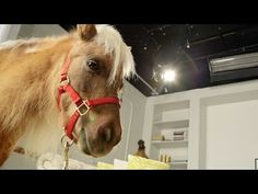 Does Size Matter? This Minihorse Says No! Size Matters, Cute Animals, Sayings, Youtube, Pretty Animals, Lyrics, Cutest Animals, Cute Funny Animals, Youtubers