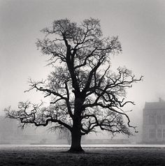 Michael Kenna ~ Graceful Oak, Broughton, Oxfordshire, England, 2005