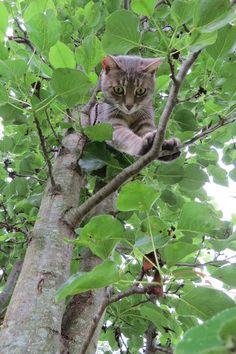 Bee Haven Acres: The Adventures of Ivy