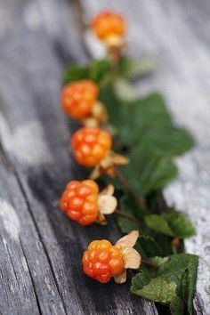 Cloudberries, the specialitiy from Lapland. Perfect to desserts :-) //my favourite berry ever Fruit And Veg, Fruits And Vegetables, Acerola, Scandinavian Food, Lappland, Stuffed Mushrooms, Pictures, Newfoundland, Raspberries