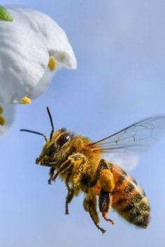 Men/'s Novelty Cycling Kits Bee Vomit Honey