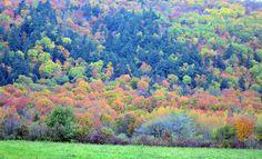 Paysage multicolore...