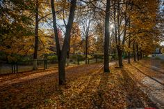 В городе Дубна наступила осень.(10)