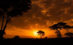 Tarangire Sunset - Sunset in Tarangire National Park, Tanzania.