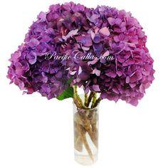 dark purple calla lily | purple hydrangeas 14 inches tall $ 185 free shipping 25 stems purple ...
