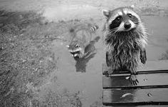 animals black and white - Google Search