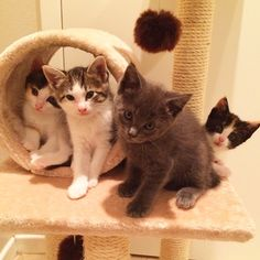 I'm fostering a sweet crew of kittens right now! The one on the back right has never seen a camera before  #catsofinstagram #kittensofinstagram #kittybungalow #scaredycat #ilovecats #crazycatlady #adoptdontshop